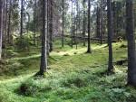 Trollskogen finns fortfarande