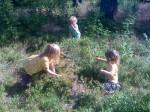 Plocka blåbär