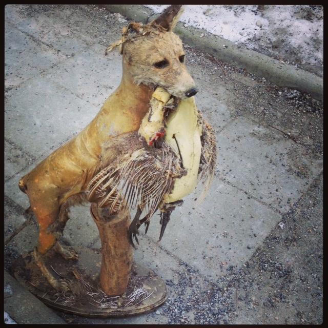 uppstoppad räv