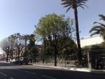 Träden slår ut i Nice