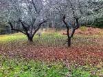 Löven på landet